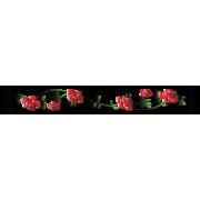 Rose Vine 3
